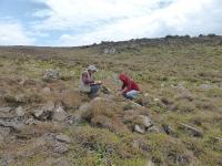 D10 - Monitorização flora endémica